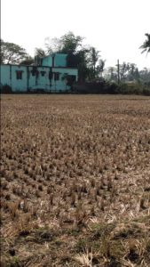 2000 sq. ft. Residential Land / Plot for Sale in Patia, Bhubaneswar