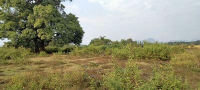 188136 sq. ft. Farm House for Sale in gurudijhatia, Cuttack