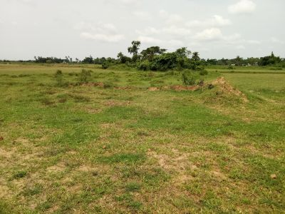 23517 sq. ft. Agricultural Land for Sale in Phulnakhara, Cuttack