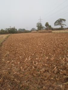 15245 sq. ft. Agricultural Land for Sale in Near Rahama, Cuttack