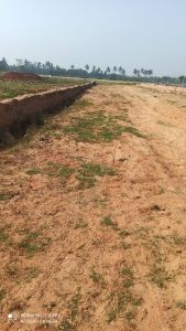 1250 sq. ft. Residential Land / Plot for Sale in Padasahi, Bhubaneswar