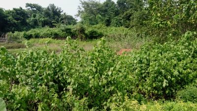 2400 sq. ft. Residential Land / Plot for Sale in Pratap Nagari, Cuttack