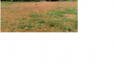 2000 sq. ft. Residential Land / Plot for Sale in Uttara Chack, Bhubaneswar